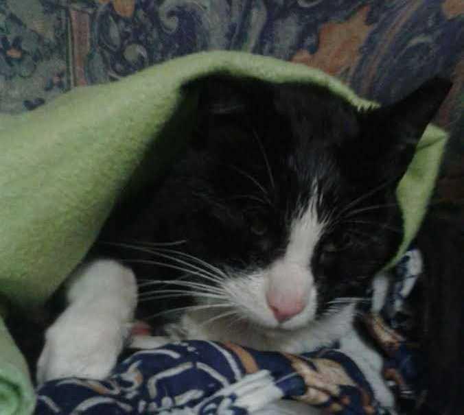 Gato salvo no Choupal