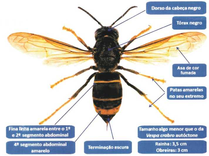 Informações vespa