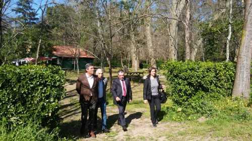 Sec. Estado Florestas - Choupal